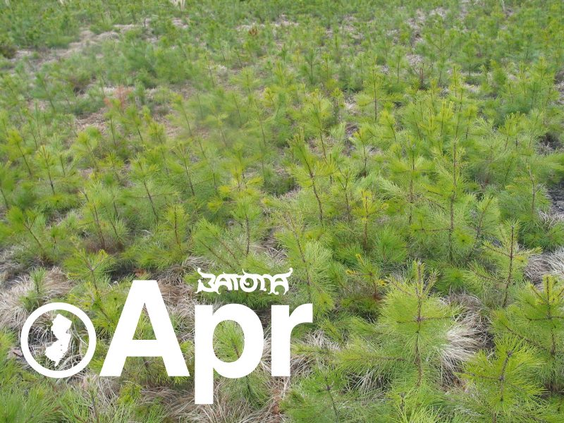 Batona News For April 2013