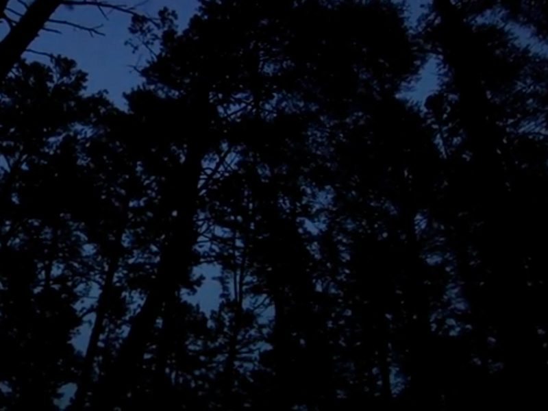 Watch A Pine Barrens Adventure: Trailer 1 for the Cloud People motion picture Wild Refuge